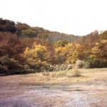 紅葉①(田代平)