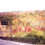 紅葉④(八甲田)